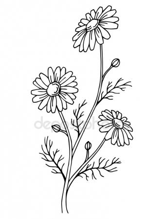 337x450 Daisy Flower Graphic Black White Isolated Sketch Illustration
