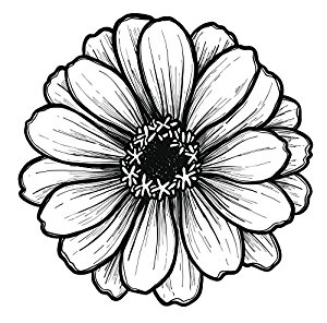300x296 Black And White Gerbera Gerber Daisy Sketch Vinyl