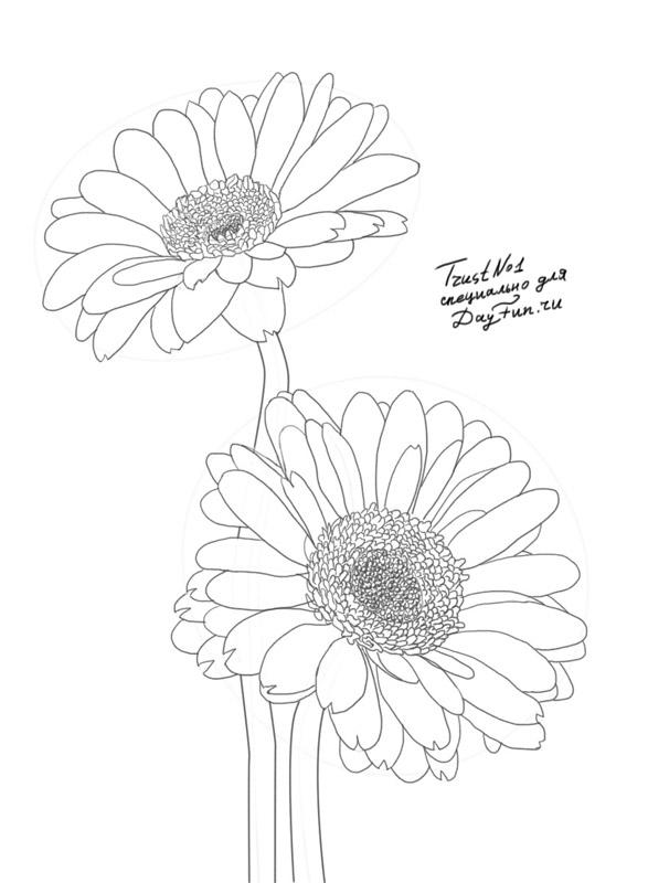 587x800 How To Draw Gerberas Step By Step