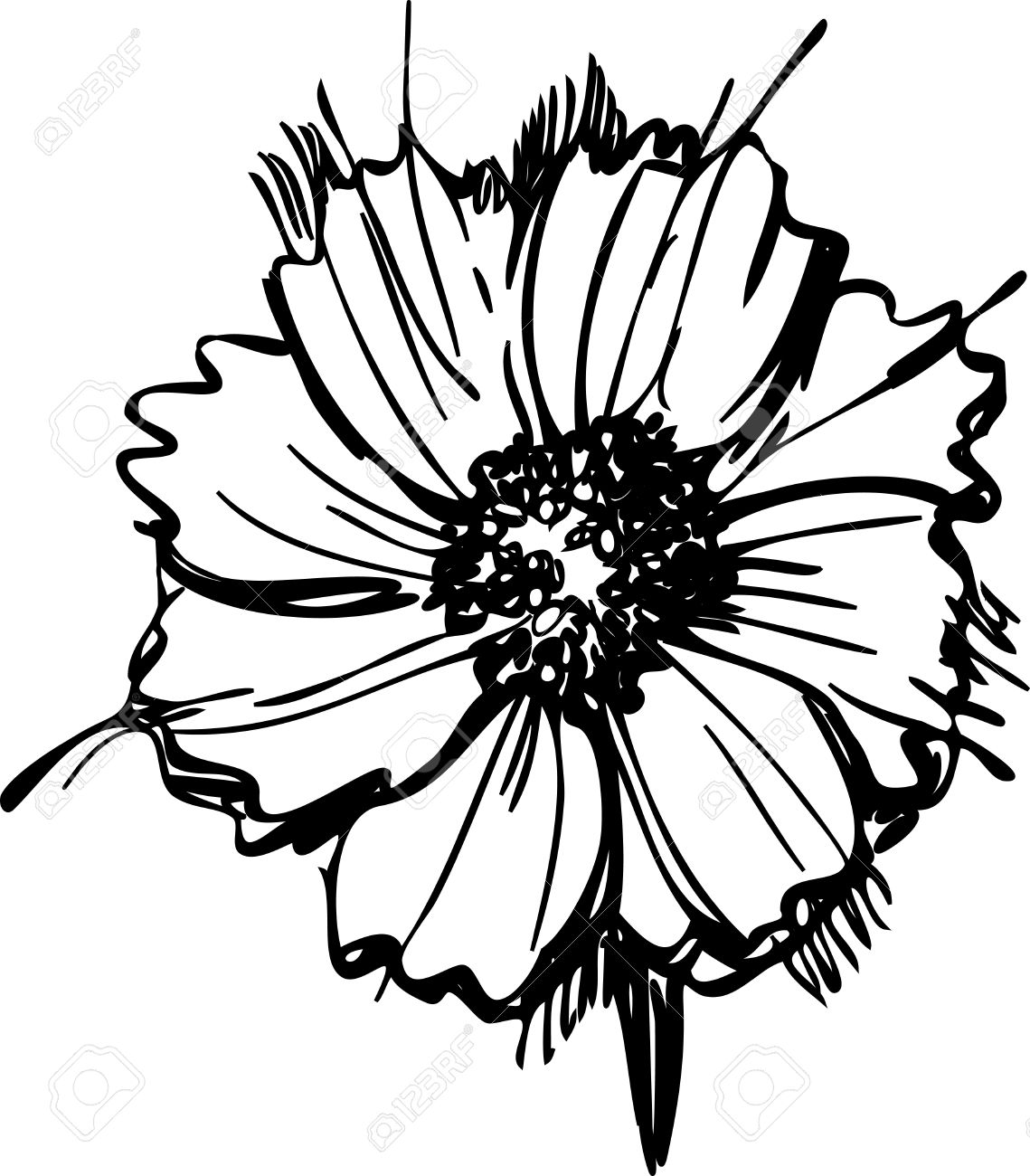 1139x1300 Sketch Wild Flower Resembling A Daisy Royalty Free Cliparts