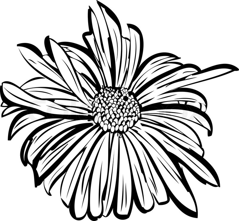 800x741 Sketch Of A Flower Garden Resembling A Daisy Stock Vector