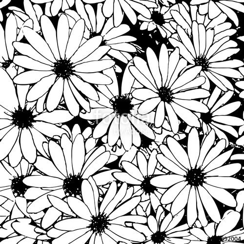 500x500 Hand Drawn Black And White Daisy Flowers As A Background Vector