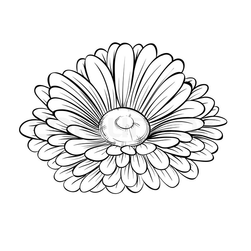 800x800 Beautiful Monochrome Black And White Daisy Flower Isolated