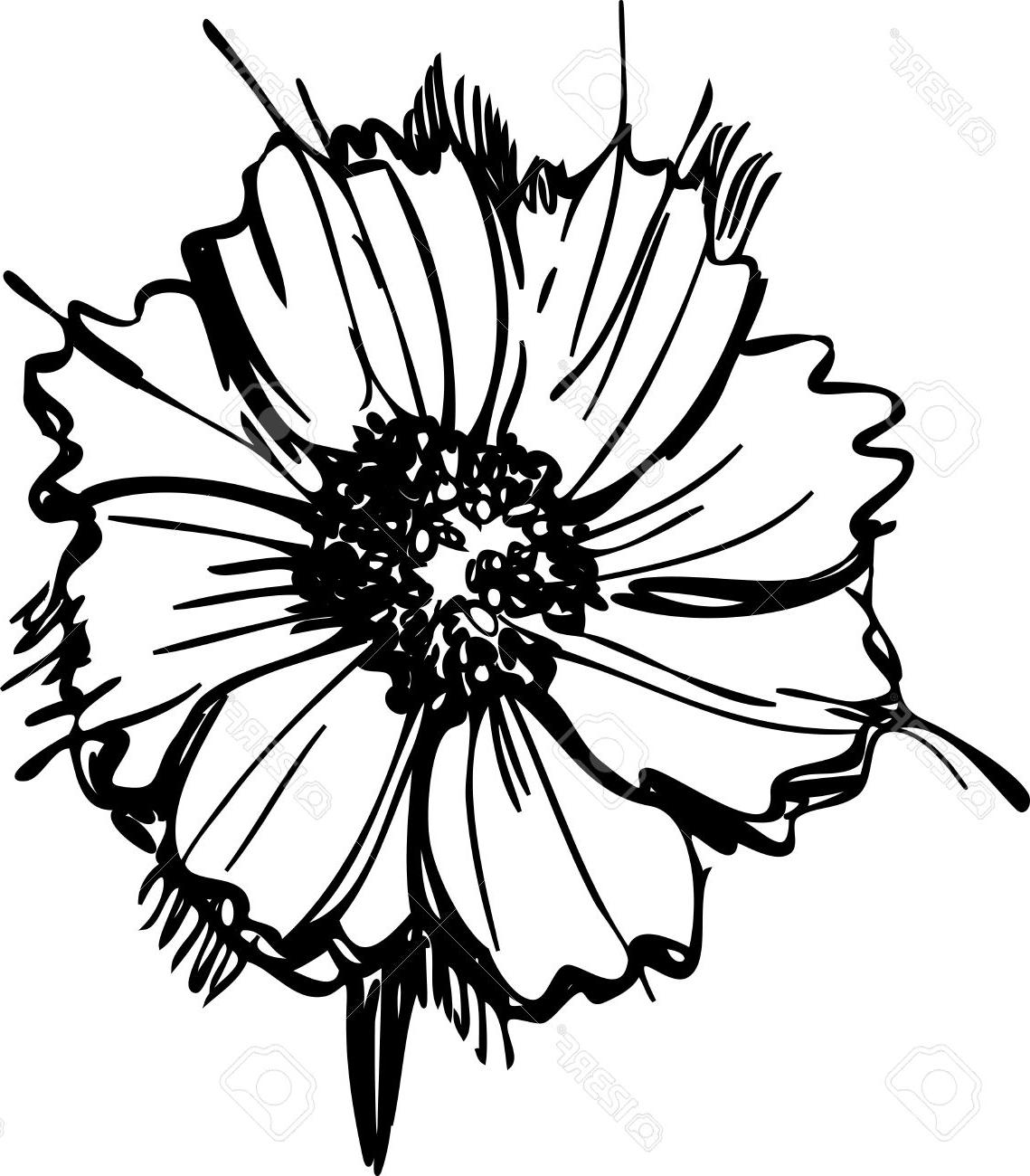 1139x1300 Best Hd Sketch Wild Flower Resembling Daisy Stock Vector Flowers