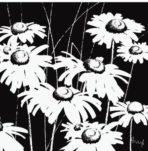 490x500 Black And White Daisy Art Print By Franz Heigl