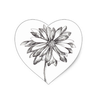 324x324 Black And White Daisy Drawing Gifts On Zazzle
