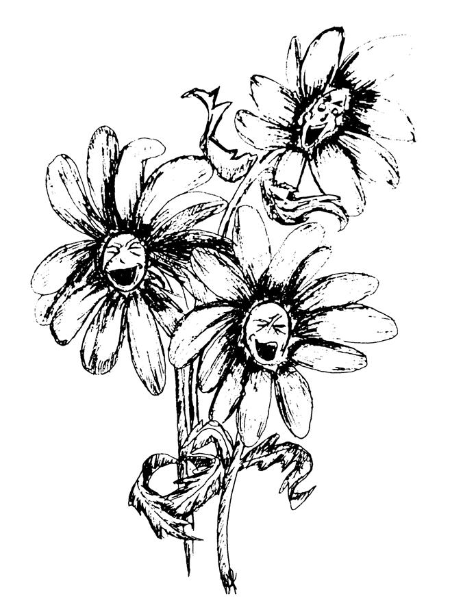 695x900 Black And White Daisy Drawings Fine Art America
