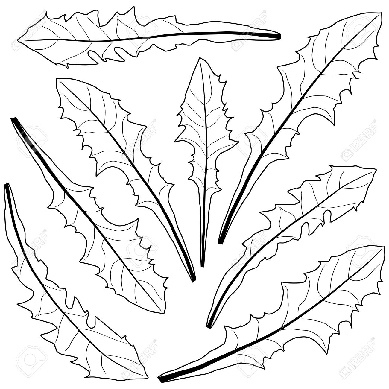 1300x1300 Dandelion Leaves In Black And White Royalty Free Cliparts, Vectors