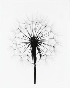236x296 Pin By Genoveva M. On Black And White Artsy