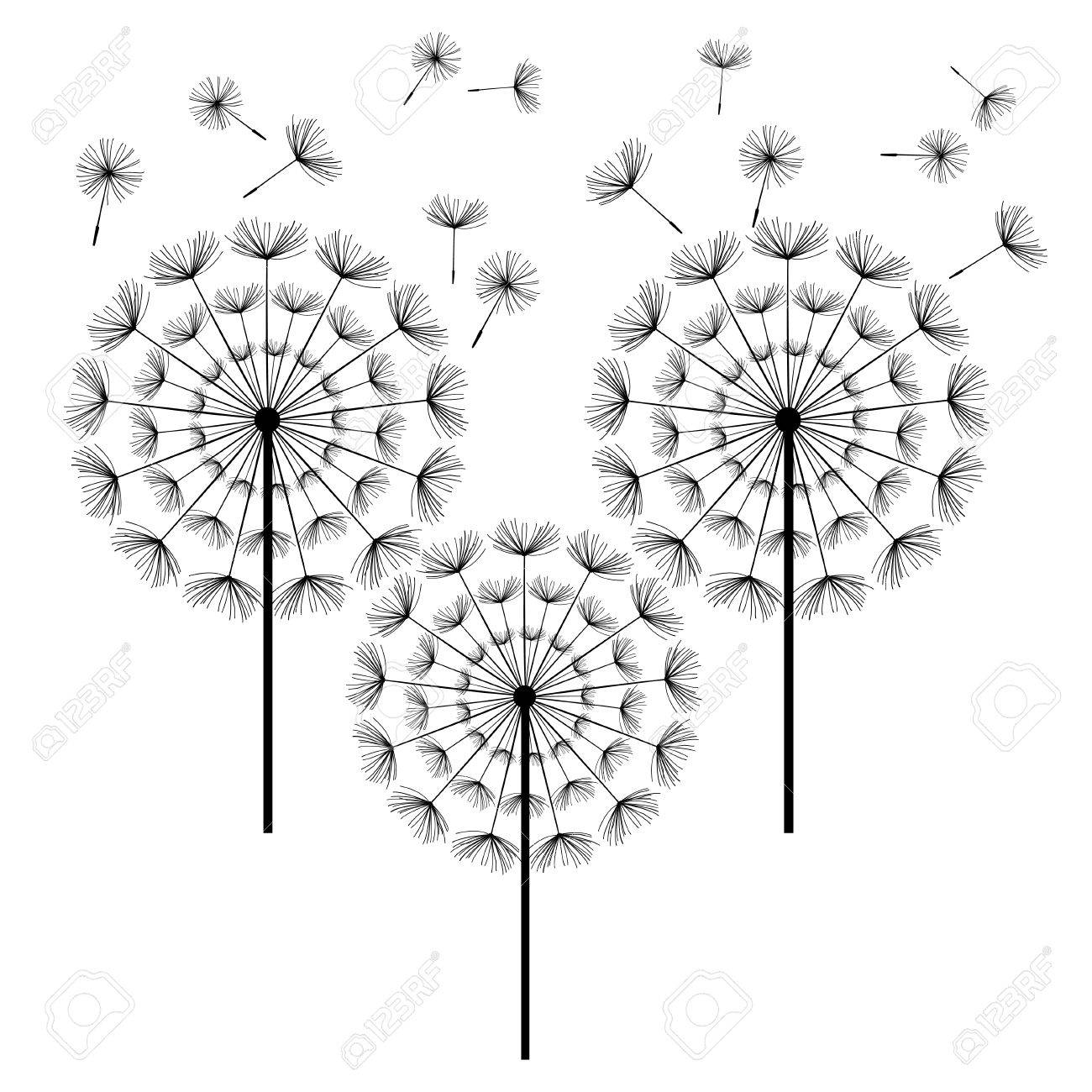 1300x1300 Three Black Dandelions With Flying Fluff Isolated On White