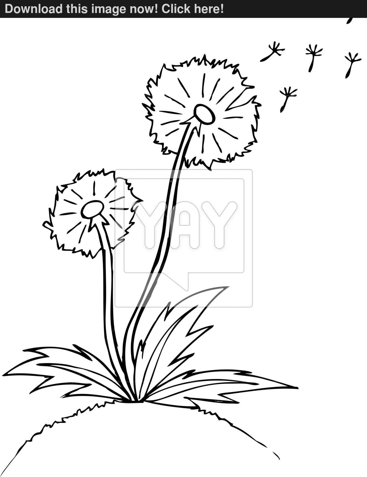 1232x1600 Vector Illustration. Dandelion. Black Outline Sketch Vector