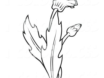 440x330 Dandelion Coloring Page Joandco.co