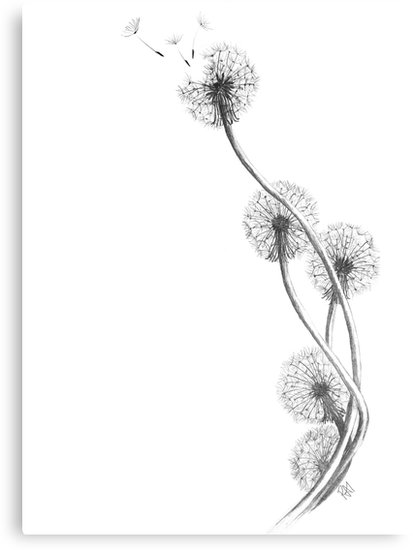 413x550 Detailed Drawing Of Dandelion Clocks Metal Prints By Rai Musk