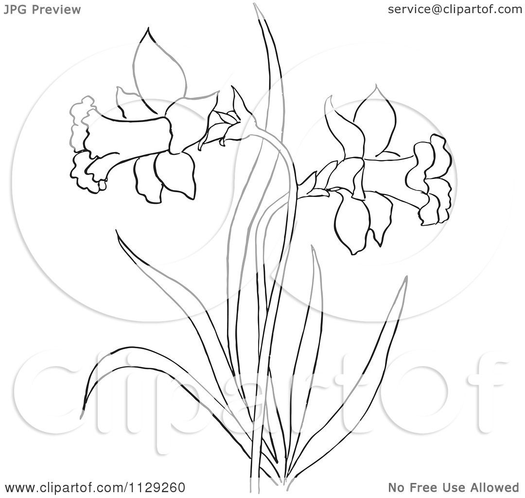 1080x1024 Cartoon Clipart Of An Outlined Dandelion Flower Plant