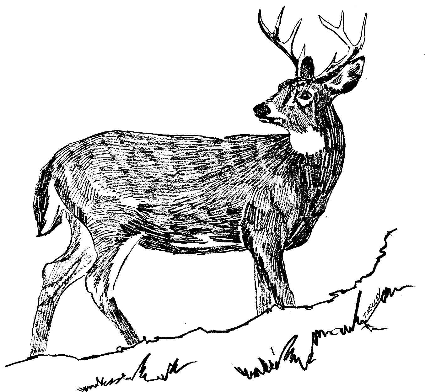 Black And White Deer Drawing