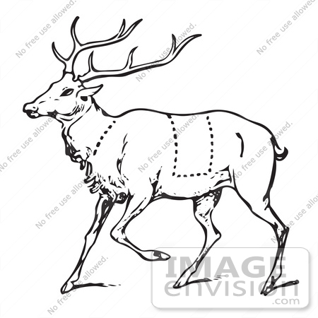 450x450 Clipart A Vintage Black And White Deer With Butcher Sections