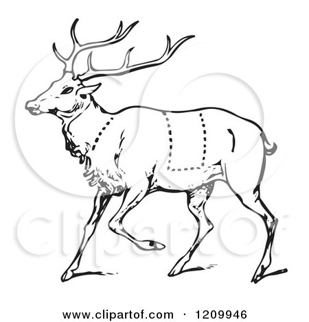 450x470 Clipart Of A Black And White Deer With Butcher Sections Of Venison