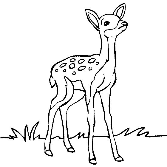 560x560 Deer Clipart Black And White