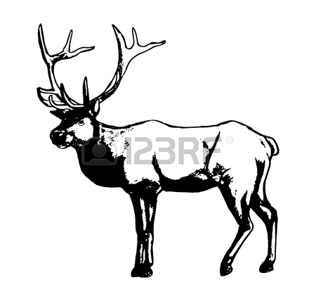 450x428 Graphic Image Of Deer. Black Outline Of A Reindeer On A White