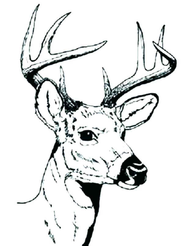 618x805 Whitetail Deer Coloring Pages This Is Deer Coloring Pages Pictures