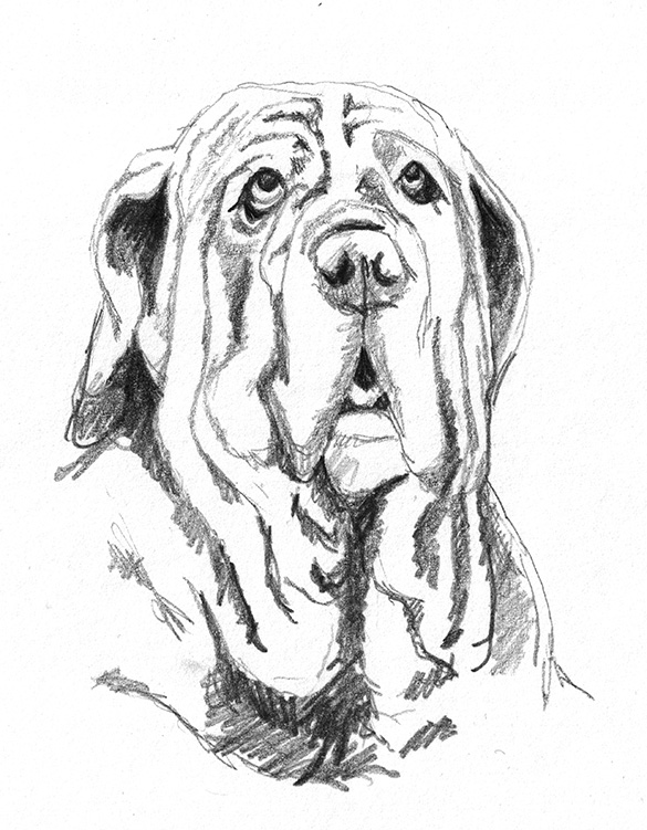 585x751 Dog Sketches