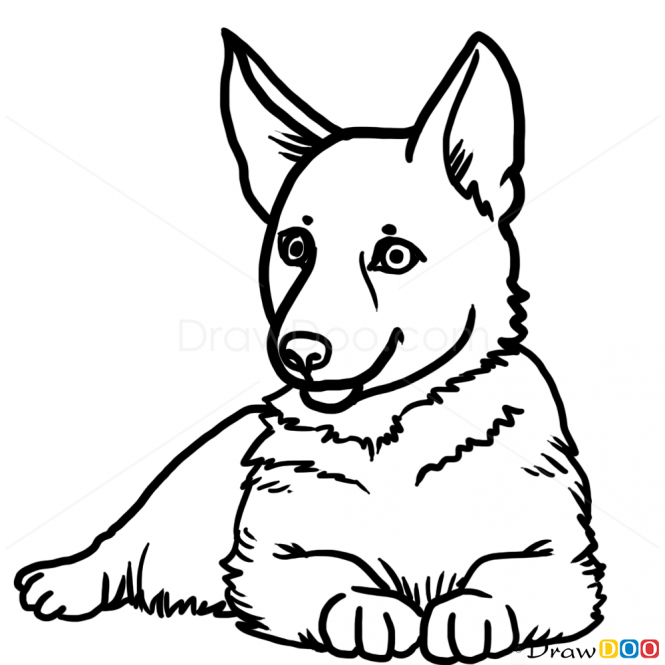 665x665 How To Draw Puppy, German Shepherd, Dogs And Puppies Acrylics