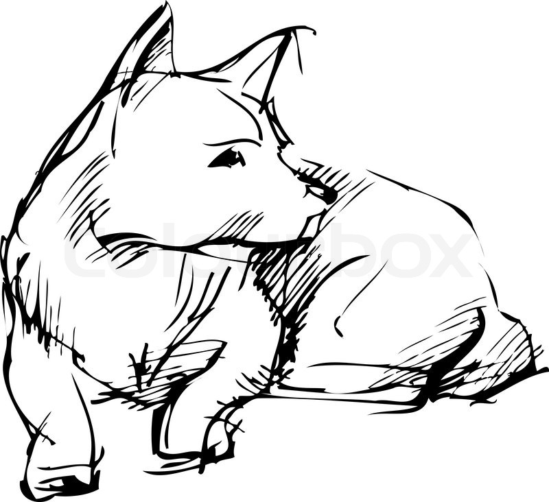 800x732 Sketch Of Home Animal Dog That Lies Stock Vector Colourbox