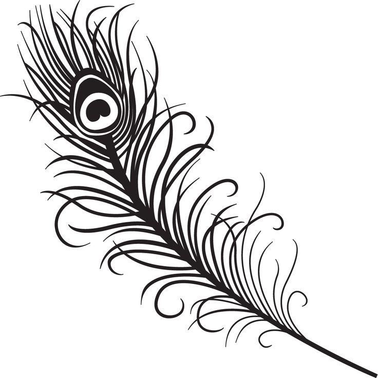 736x736 Drawn Peacock Line Art