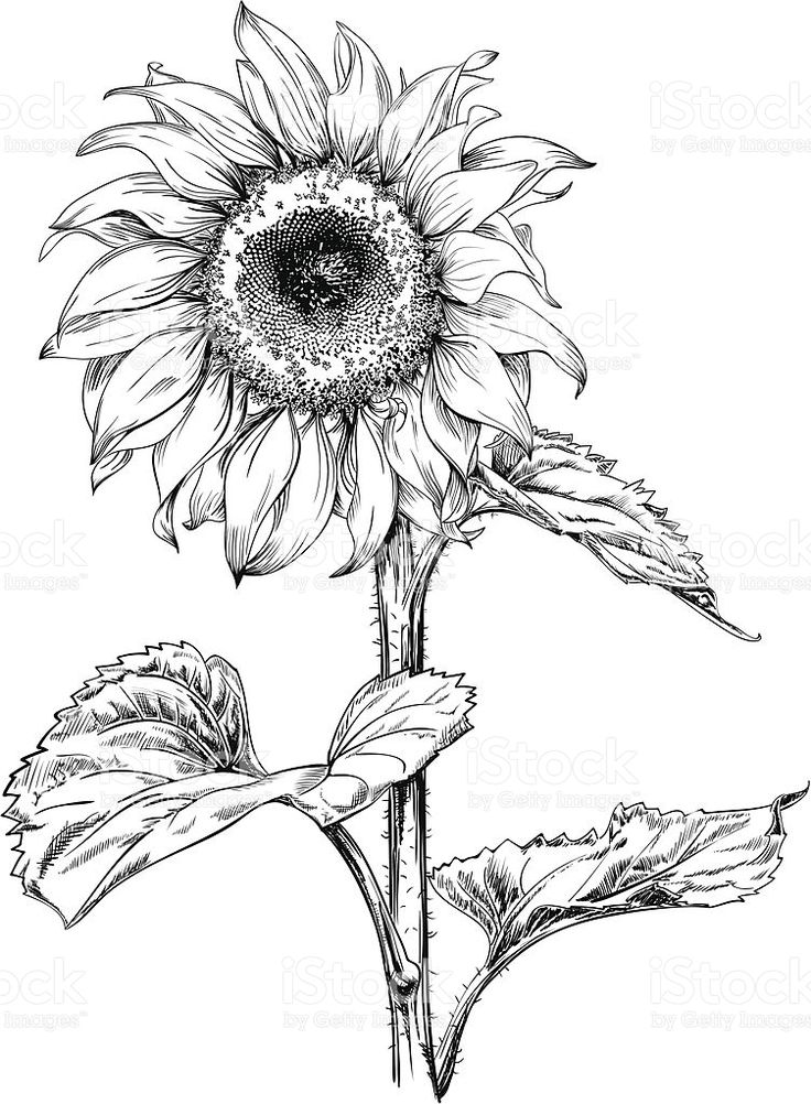 736x1002 Gallery Free Black And White Drawings,