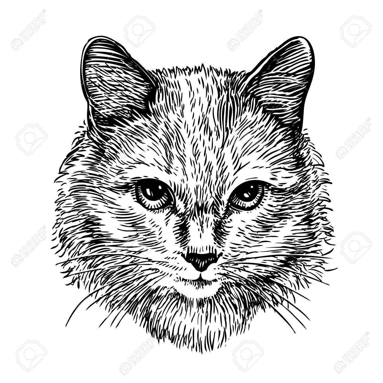 1300x1300 Hand Drawn Portrait Of Cute Cat, Sketch. Art Vector Illustration