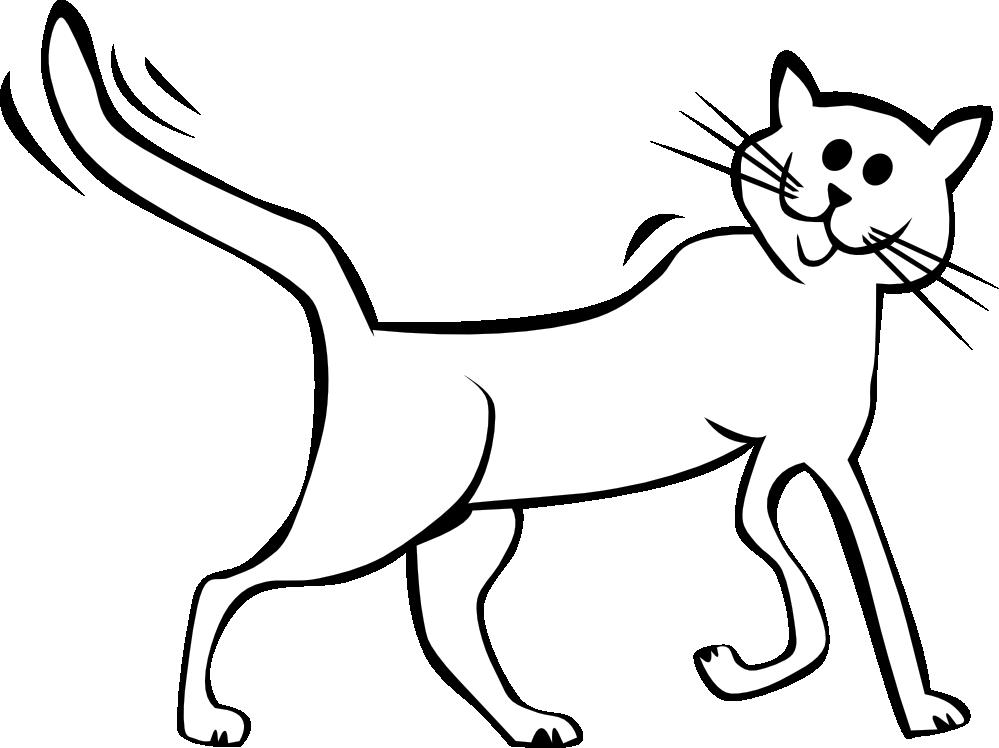 999x748 White Cat