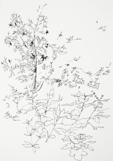 375x532 Tree Drawings For Sale Saatchi Art