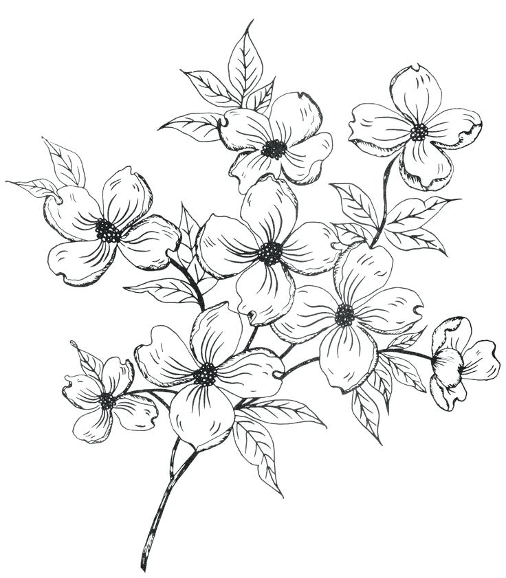 736x841 flowers drawing drawing of a flower 6 nice design draw flower step