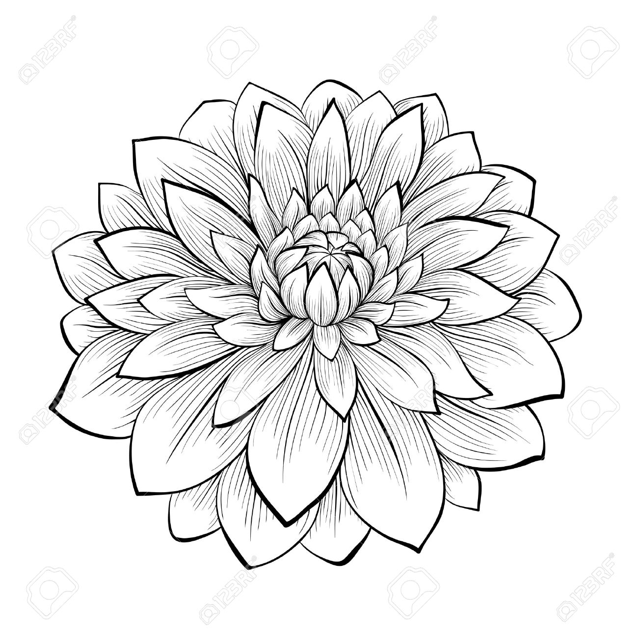 Black and white drawing of flowers at getdrawings free for 1300x1300 hand drawn flower stock photos royalty free business images mightylinksfo