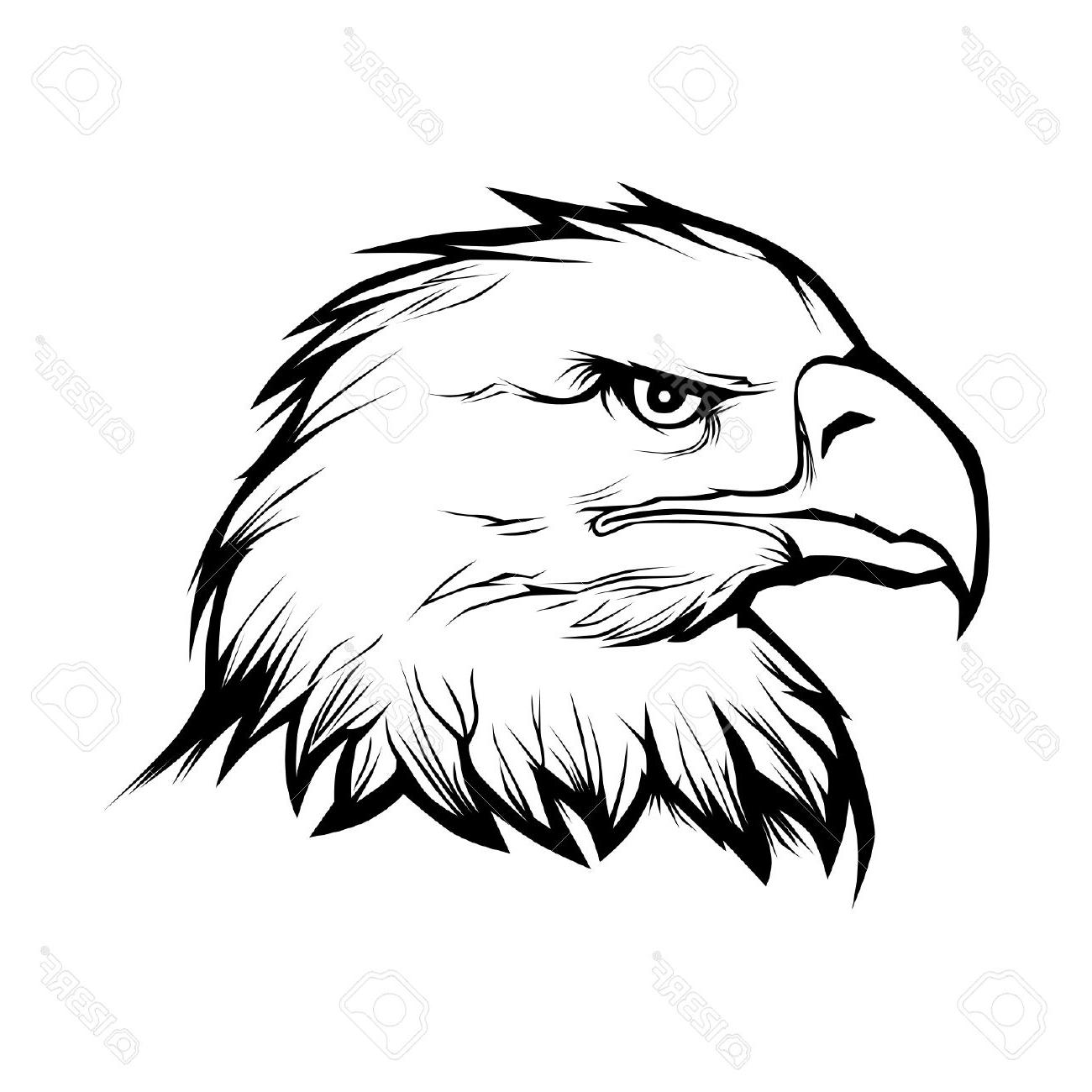 Black And White Eagle Drawing At Getdrawings Free For Personal