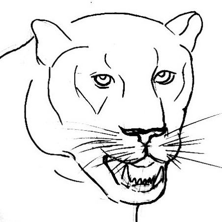 452x453 How To Draw A Panther Face