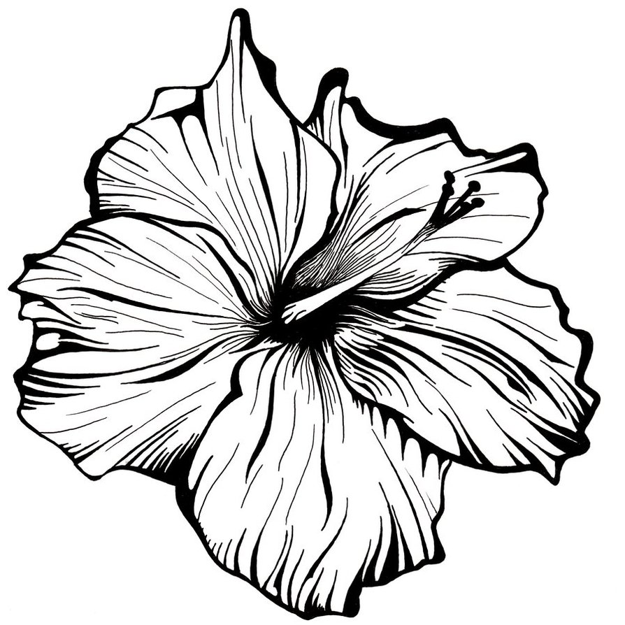 Black And White Flowers Drawing At Getdrawings Free For
