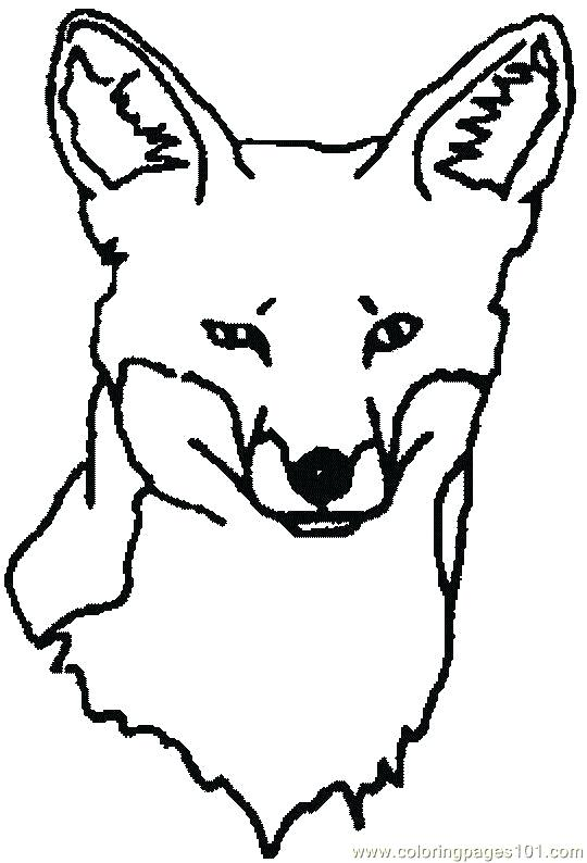 540x794 Red Fox Coloring Pages Coloring Pages About Arctic Foxes Arctic