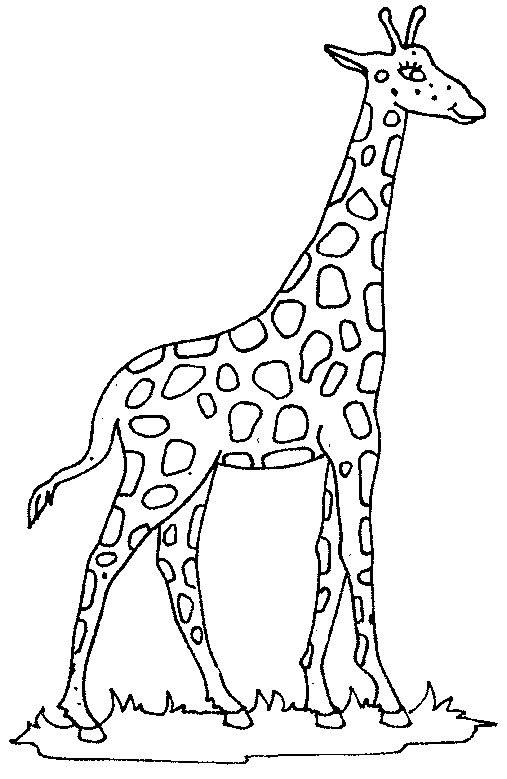 Black And White Giraffe Drawing