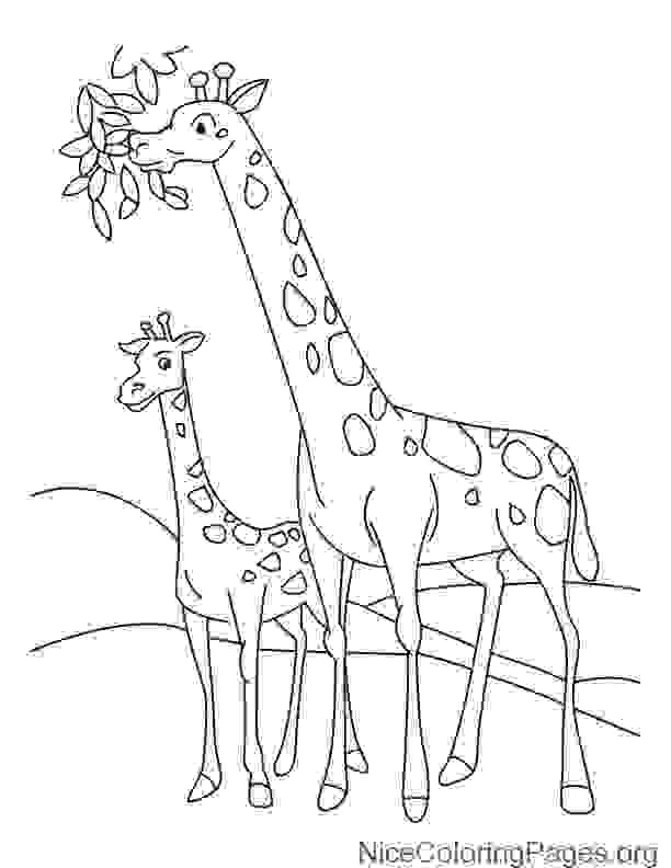 Black And White Giraffe Drawing at GetDrawings | Free download