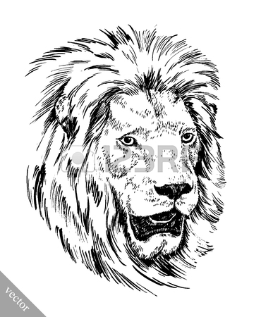 387x450 Black And White Lion Stock Photos. Royalty Free Business Images