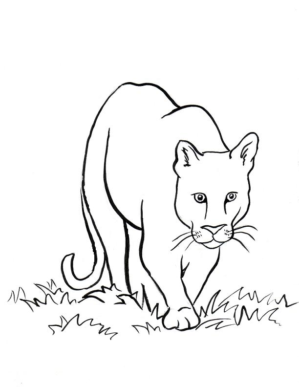 612x792 Mountain Lion Clipart Black And White