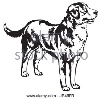 333x320 Black Outline Drawing Of Dog Isolated On A White Background Stock