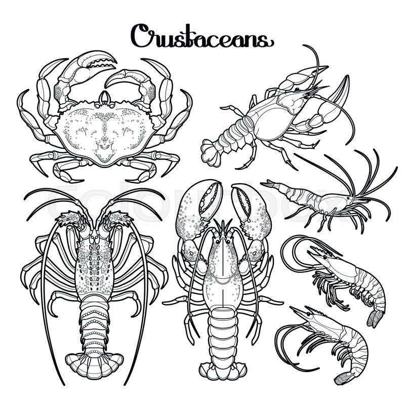 800x800 Graphic Crustaceans Collection Drawn In Line Art Style. Sea