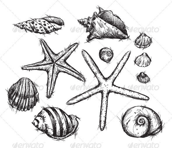 590x506 Selection Of Sea Shells Drawings Shell Drawing, Drawings And Tag Art