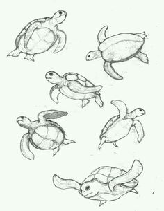 236x305 How To Draw A Sea Turtle Step 5 Art With Turtles