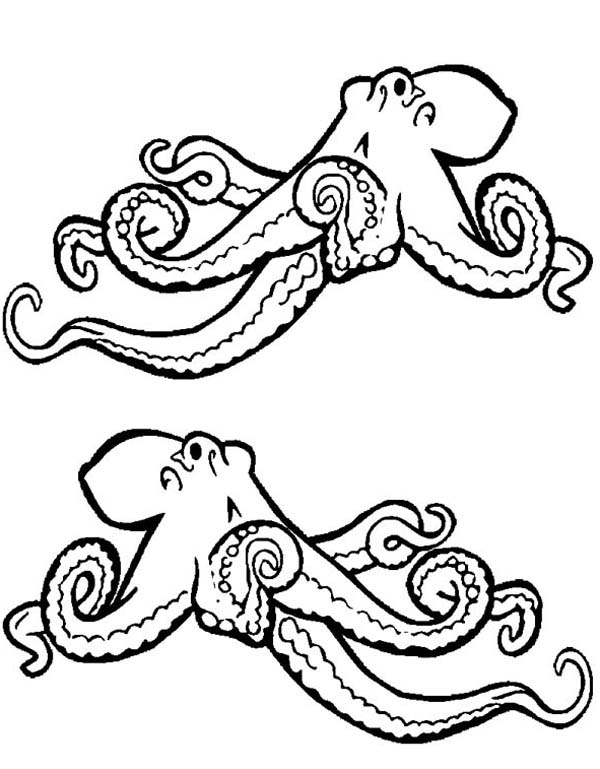 600x769 Octopus Drawing Black And White