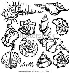 236x246 Seashells Doodle Seashells Starfish For You Design