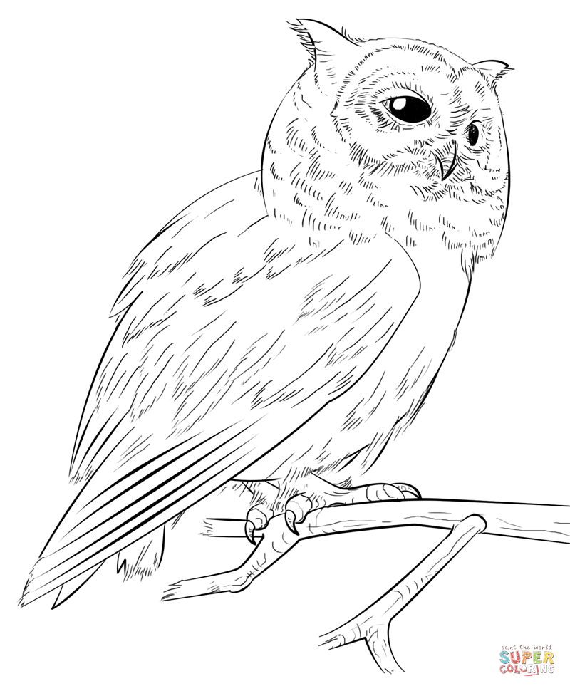 800x970 Southern White Faced Owl Coloring Page Free Printable Pages