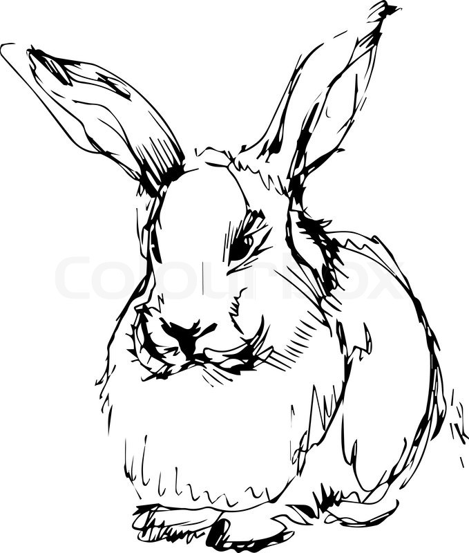 Black And White Rabbit Drawing